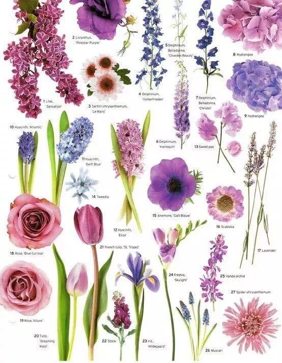 花园植物配色魔法学,你get到了吗?_7