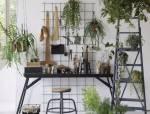 十种· 有趣的垂吊植物吧