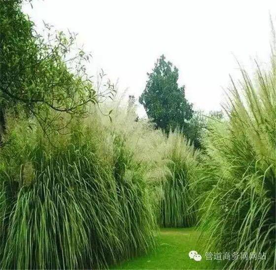 植物如何完美搭配海绵城市建设