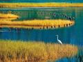 一份全面的人工湿地工程技术指南