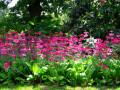 常见园林绿化植物名称大全及图片|园林植物图片