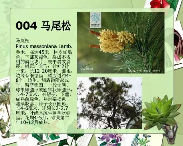 100种常见园林植物图鉴-20160523_183224_007.jpg