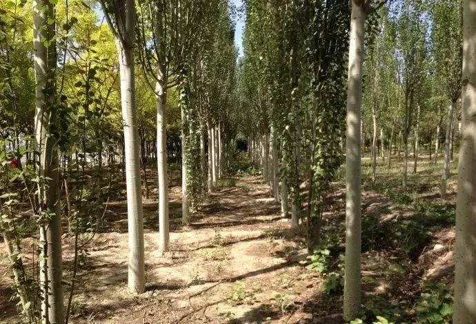多彩观干植物,萧瑟的冬天里没有叶子照样成景!_13