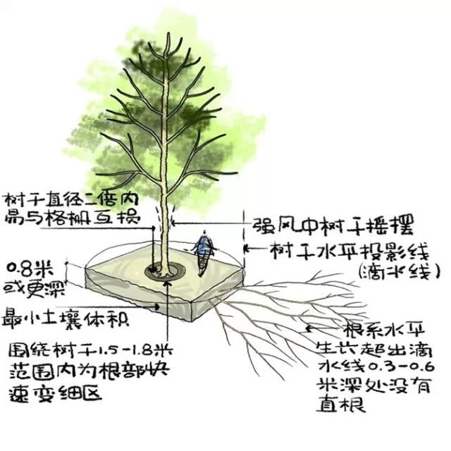 种植秘诀·图解园林景观之乔木种植技术-640.webp (4).jpg