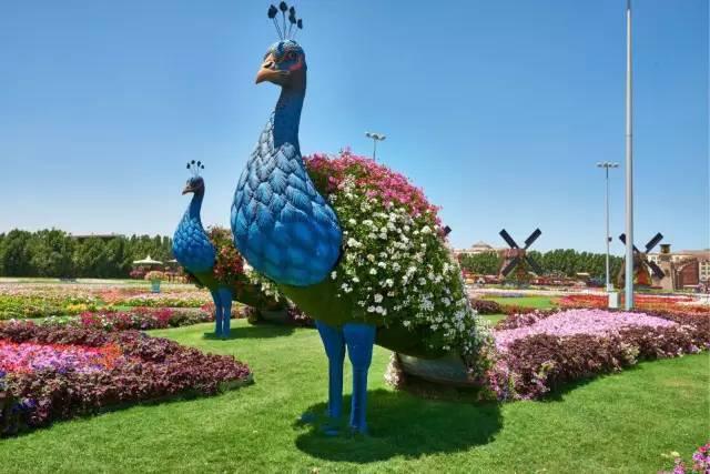 迪拜的花卉展览,全世界规模最大!你肯定没看过!_27