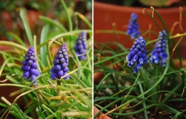18种常见的镶边植物,你认识几种??_41