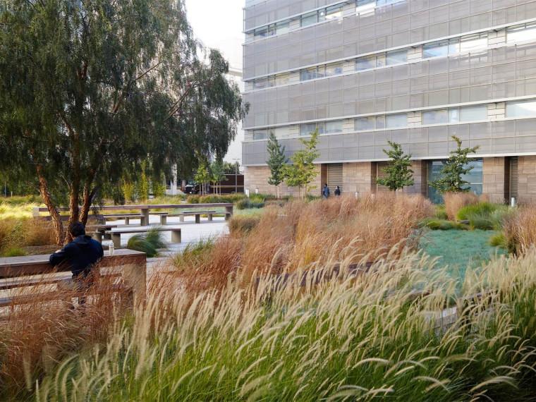 史密斯心血管研究学院庭院景观