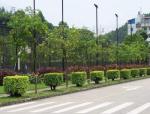 [重庆]印象望江苑临时施工道路施工方案