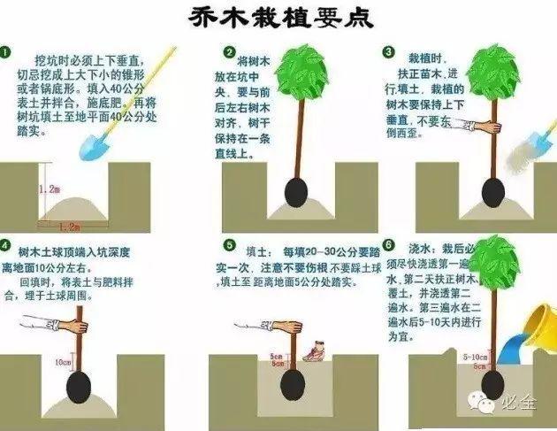 园林植物绿化常见问题解答·超实用!