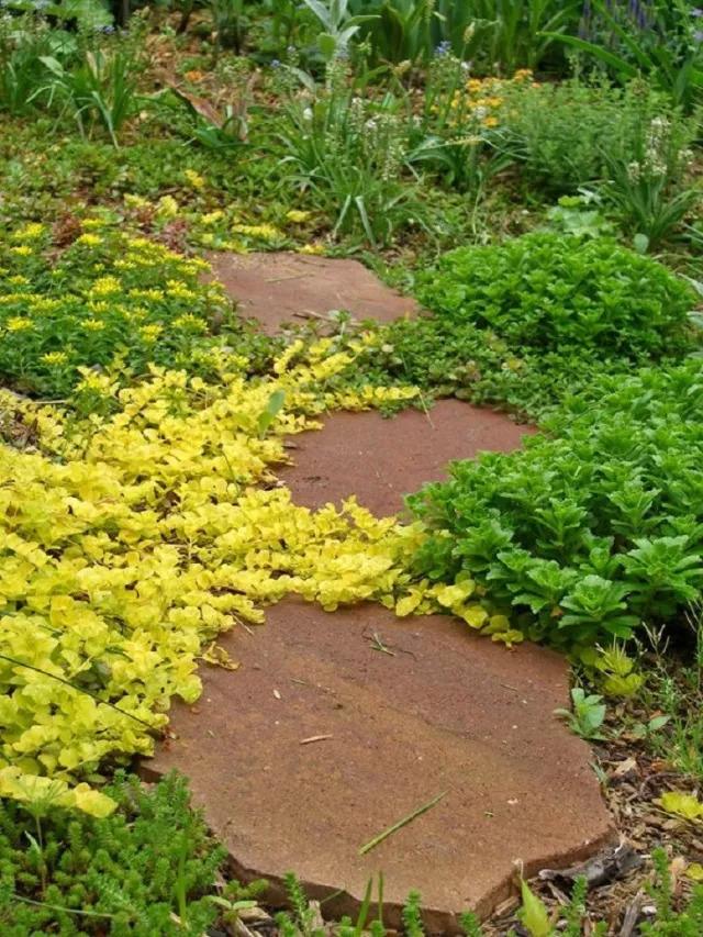 不起眼的小野花,也可以给你的花园带来惊喜_8
