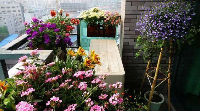 想要这样一个阳台,过小日子,看花开_4