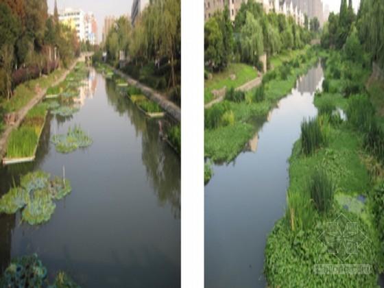 河道生态治理技术及养护要求