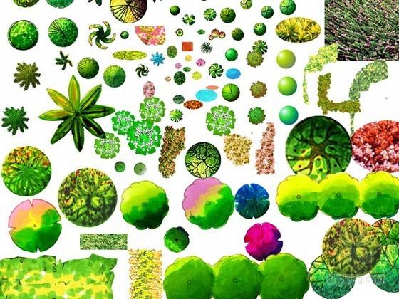 植物平面素材