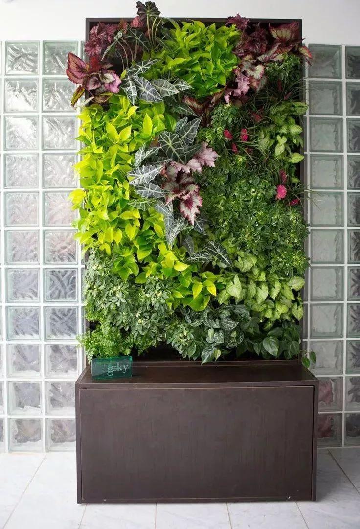 """墙上""""种""""植物,竟如此好看?_16"""