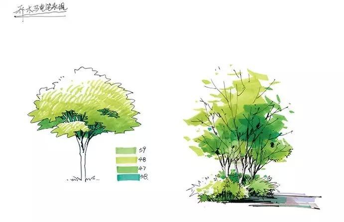 园林景观马克笔手绘_4
