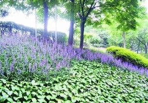 干货 景观地被植物的选择方式_25