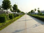 道路绿化植物配置讲义总结(28页)