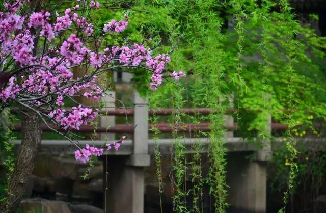 中国古典园林|留园_7