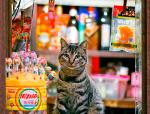 上海老城街铺里,那些自在生活的猫猫们!
