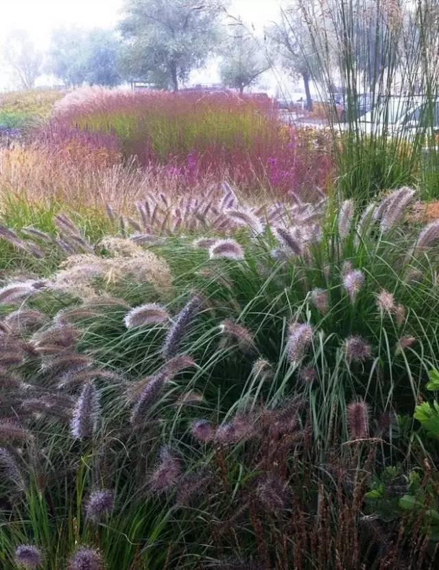 深秋的山草,美如画_3
