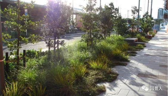 城市干道植物配置,实用干货不得不看!_23