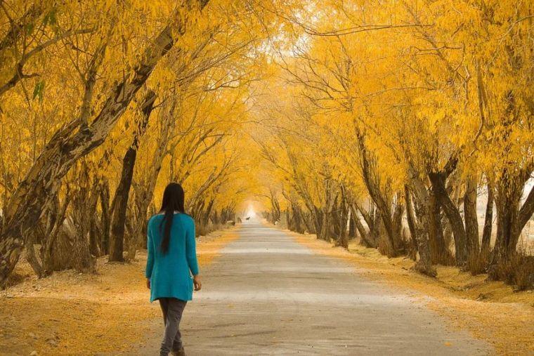 中国最美红叶观赏指南,错过再等一年_5