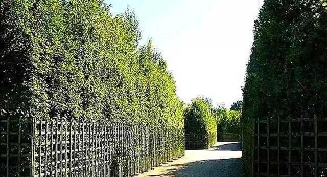 """这些必备的""""植物造景"""",不止是种树种花_6"""
