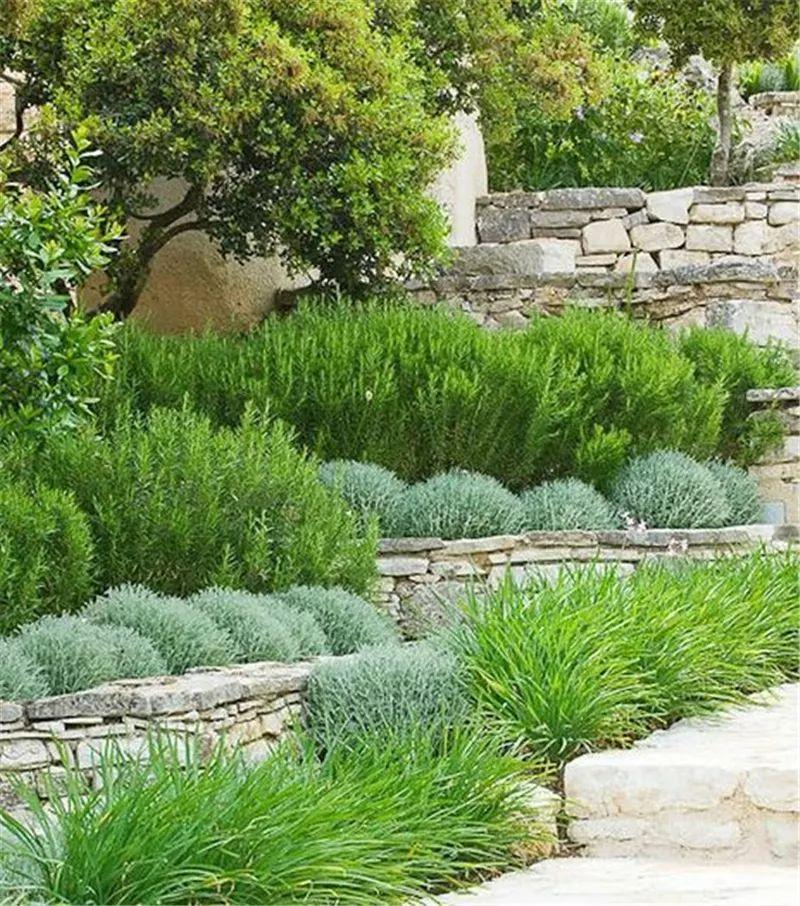 植物造景·实用景观设计来一波_26