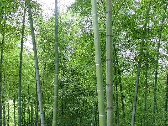 植物界的吉尼斯世界纪录大全-640.webp (14).jpg