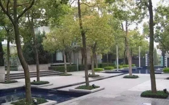 树阵景观的植物配置要点!_15