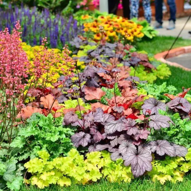 庭院中这些耐寒植物,露地也能越冬