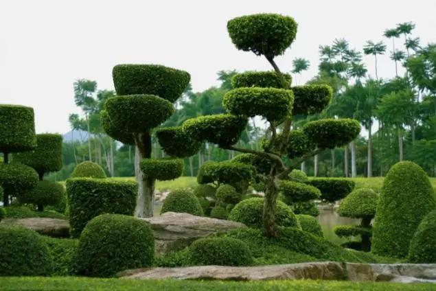 灵气之源·中式庭院主景树一览_28