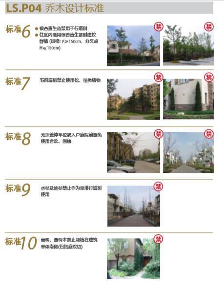 大型地产公司绿化绿皮书(做法与验收标准)-大型地产公司景观植物绿化绿皮书-6乔木设计标准