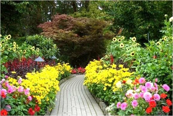 干货!宿根花卉在植物景观配置中的应用