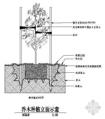 乔木种植立面示意