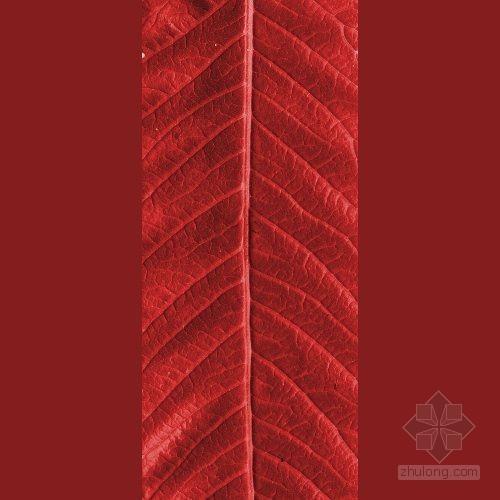 红色叶子植物贴图
