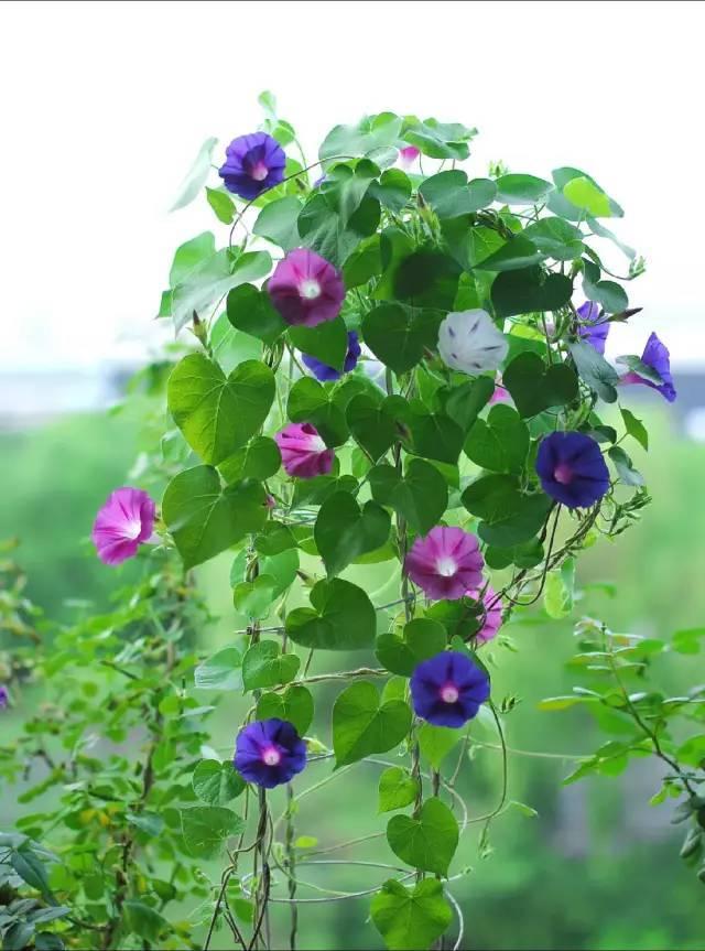 想要这样一个阳台,过小日子,看花开_17