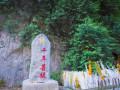 """三千年的菩提树竟然长出一只""""佛手"""",网友直呼:太神奇了!"""