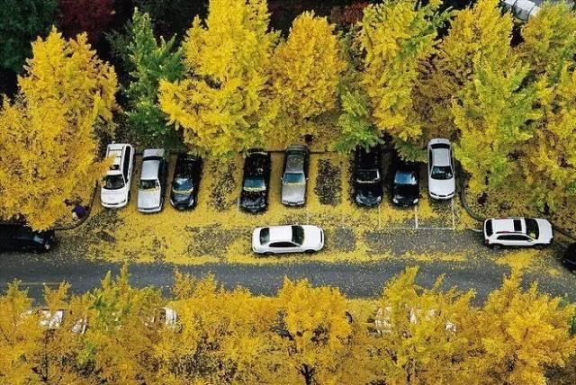 停车场也玩生态_17