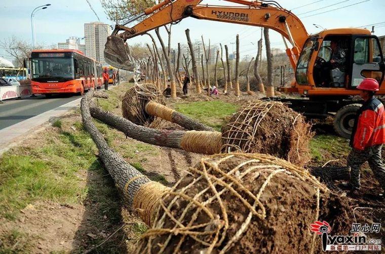 市政道路绿化工程施工具体方案和措施_3