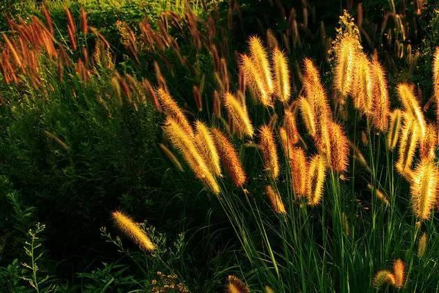 深秋的山草,美如画_21