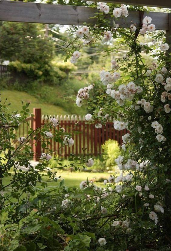 想要一个小院子,花开花落一辈子_17