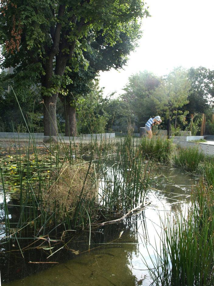 住宅区中的私人花园景观实景图 (9)
