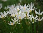 春暖花开,142种开花植物~