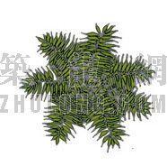 平面彩图树25