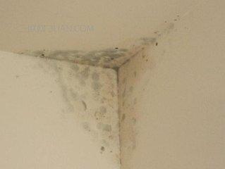 [防水技术干货]家装内墙出现渗漏怎么处理?