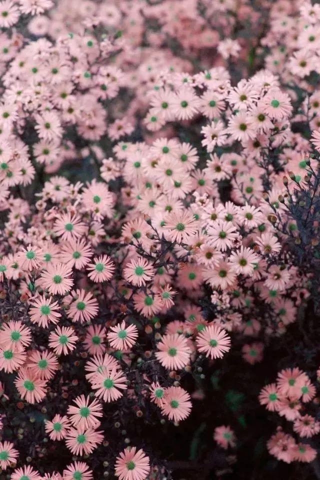 花园植物配色魔法学,你get到了吗?_20