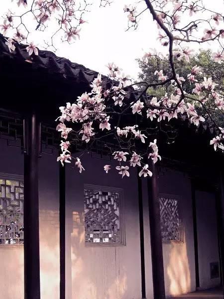 花窗之美,穿越千年而来_4