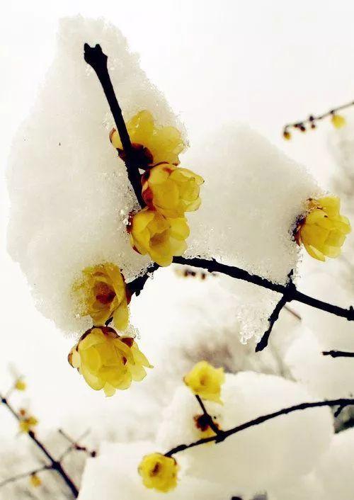 暗香疏影,踏雪寻梅,太美了!_11