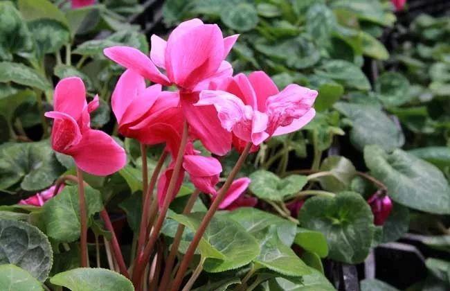冬季开花植物 · 严寒之下的美